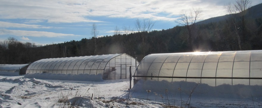 Winter at the greenhouses